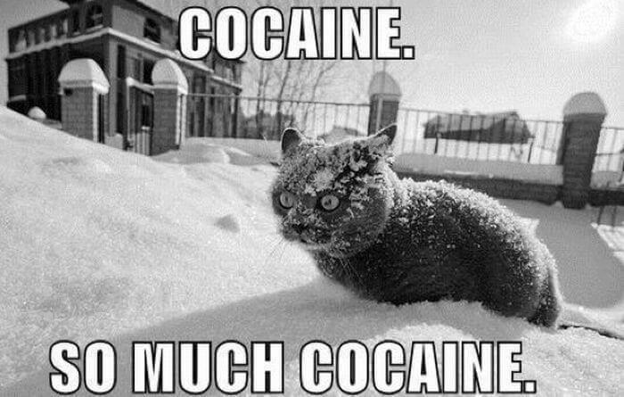 cocaine in my rockit brain